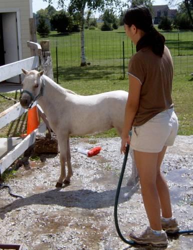 horse bathing